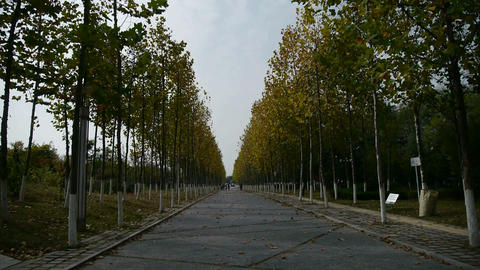 long road through the woods,falling yellow leaves Stock Video Footage