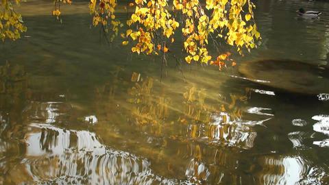 Autumn Lake Scene in Japanese Garden Stock Video Footage
