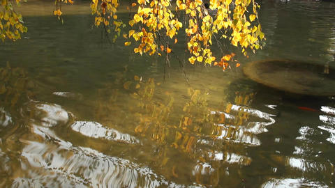 Autumn Lake Scene in Japanese Garden Stock Video Footage