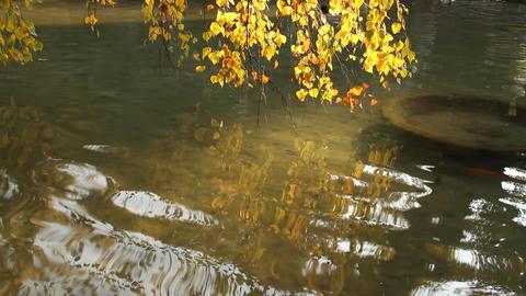 Autumn Lake Scene in Japanese Garden Footage