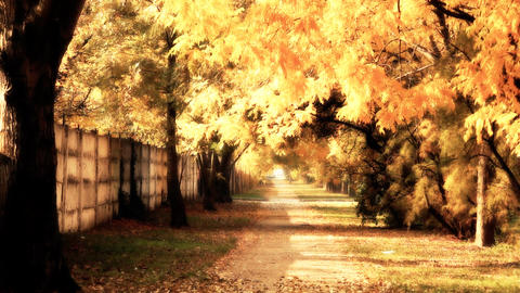 Autumn Scene Industrial Area 03 falling leaves stylized Stock Video Footage