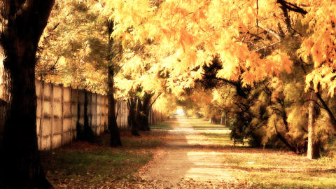 Autumn Scene Industrial Area 03 falling leaves stylized Stock Video Footage