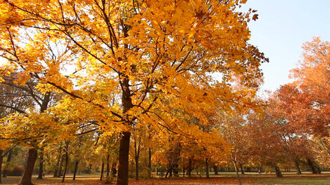 Beautiful Autumn Scene 03 falling leaves Stock Video Footage