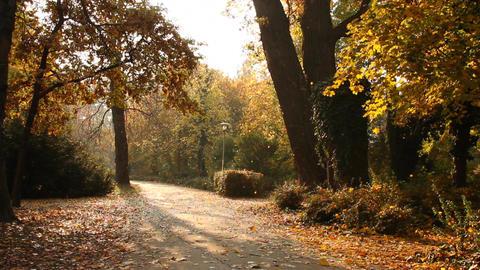 Beautiful Autumn Scene 06 falling leaves Stock Video Footage