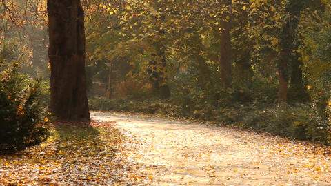 Beautiful Autumn Scene 08 falling leaves Stock Video Footage