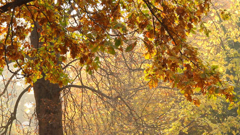 Beautiful Autumn Scene 10 falling leaves Stock Video Footage