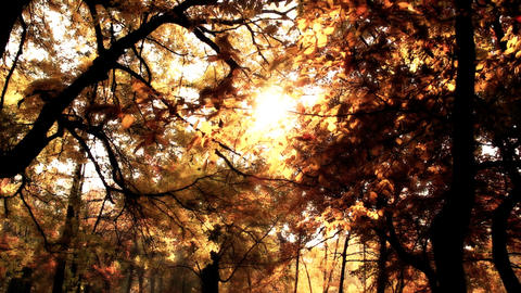 Beautiful Autumn Scene 14 falling leaves stylized Stock Video Footage