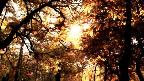 Beautiful Autumn Scene 14 falling leaves stylized Footage
