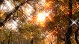 Beautiful Autumn Scene 16 falling leaves stylized star filter Footage