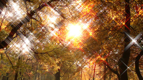 Beautiful Autumn Scene 16 falling leaves stylized star... Stock Video Footage