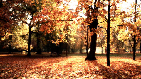 Beautiful Autumn Scene 18 stylized Stock Video Footage