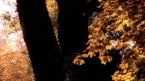 Beautiful Autumn Scene 20 falling leaves stylized Stock Video Footage