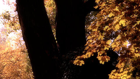 Beautiful Autumn Scene 20 falling leaves stylized Footage