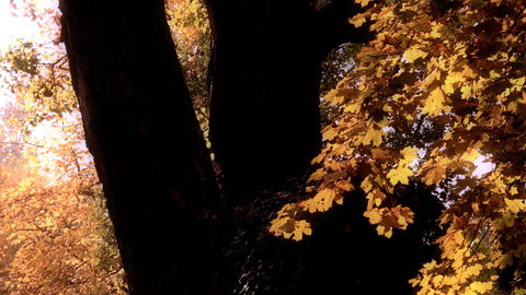 Beautiful Autumn Scene 20 falling leaves stylized Stock Video Footage