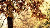 Beautiful Autumn Scene 22 falling leaves stylized Footage