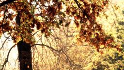Beautiful Autumn Scene 22 falling leaves stylized Stock Video Footage