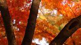 Beautiful Autumn Tree 02 light reflections Footage