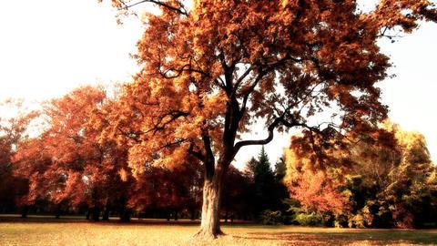 Beautiful Autumn Scene Elm 12 falling leaves stylized Stock Video Footage