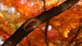 Beautiful Autumn Tree 03 light reflections Footage