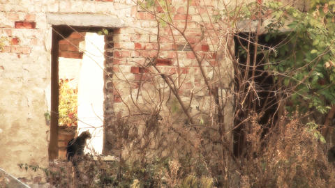 Cat in the Window of an Abandoned House stylized Stock Video Footage