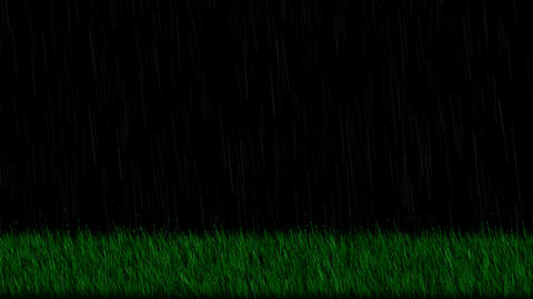 Rain,fresh spring grass at night,depth of field.wheat,barley,plants,grasslands Animation