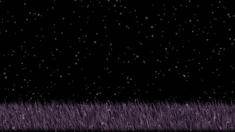 purple grass and... Stock Video Footage