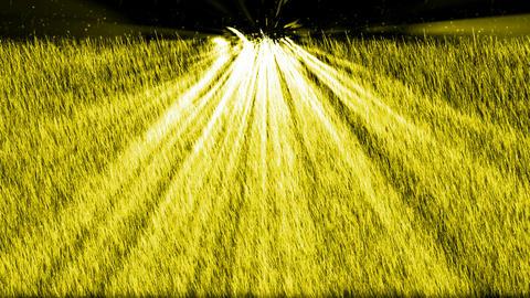 yellow light exposure on the grass,Sunrise,UFO.Grassland,wheat,barley,plant Animation