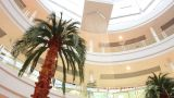 Palm In Store stock footage
