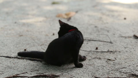 black cat sits on sand licks and goes away Footage