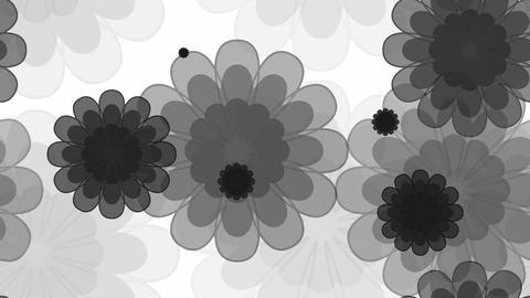 tileable black flower sweety Animation