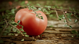 Single Tomato with a rustic background HD stock footage Footage