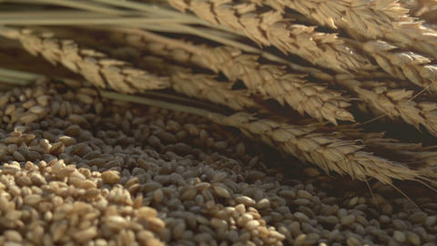 Spikes , Grain And Flour stock footage