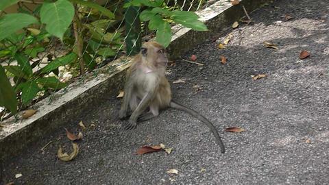 monkey 2 Footage