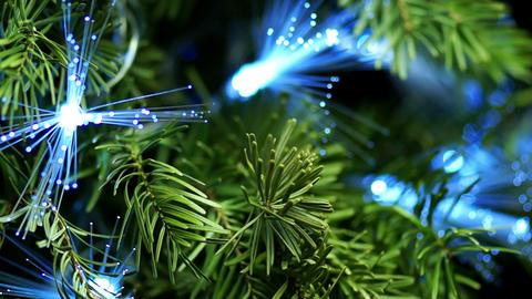 Coniferous Tree with Blue Fiber Footage