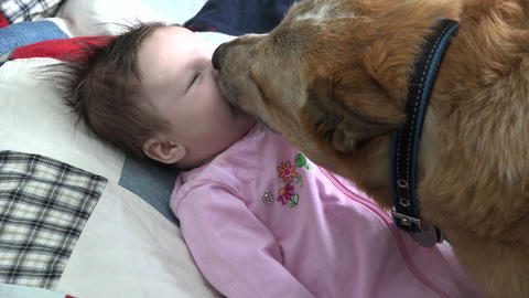 Closeup of Dog Kissing Baby Live Action