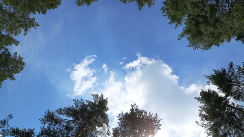 Timelapse With Clouds Between Tree Tops stock footage