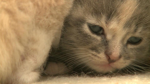 kittens and cats 18 27 Footage