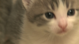 kittens and cats 19 27 Footage