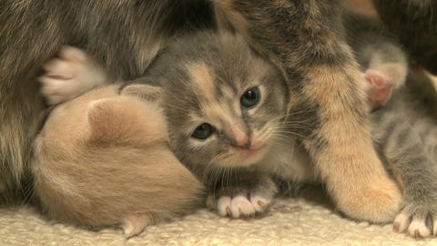 kittens and cats 2 27 Footage