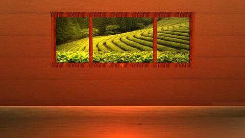 Living Room Rain Drop On Tea Farm HD stock footage