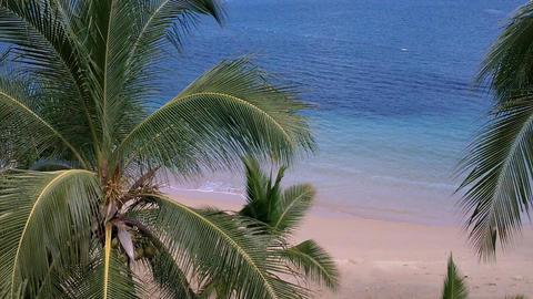 Coconut Palm Trees 04 seaside Stock Video Footage