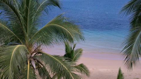 Coconut Palm Trees 04 seaside Footage