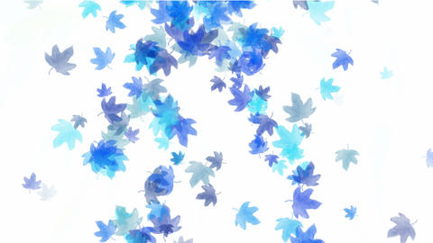 a group of blue leafs... Stock Video Footage