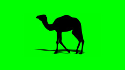 CAMEL WALK (shape) Animation