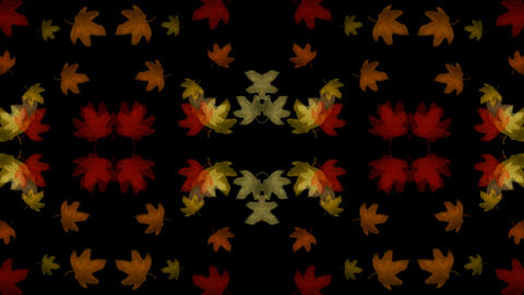 golden maple leafs shaped flower... Stock Video Footage