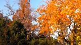 Fall 14 Footage
