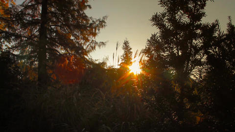 Sunset in Japanese Garden Stock Video Footage