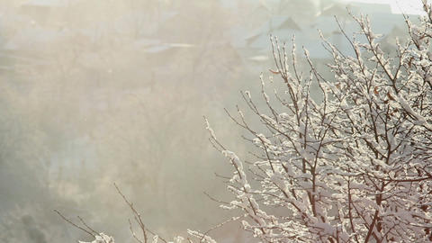 Trees in Snow 5 Stock Video Footage