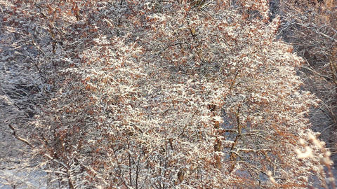 Trees in Snow 9 Stock Video Footage