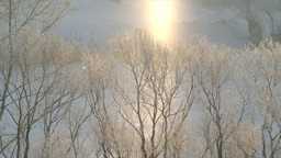 Early Morning , Sunlight , River , Birds Singing stock footage